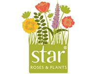 star roses plants logo