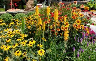 Wild Flower Plants