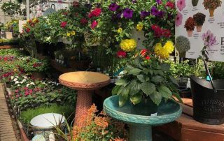 Potted Hanging Plants